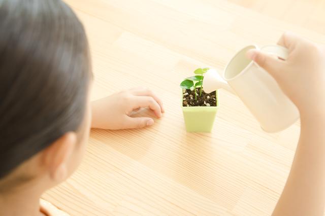苗を育てる